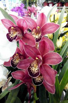 orchideje 4. (70 pieces)