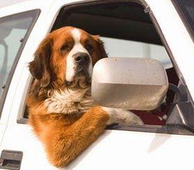 Kwispels Vakantie - hondenopvang in huiselijke kring, voor elke hond is een echt thuis: 1 (één) Formulier voor alle soorten hondenopvang i...