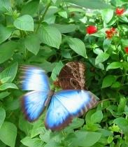 Butterfly Flutters: Beautiful Butterflies, Beauteous Butterflies, Butterflies Flutter