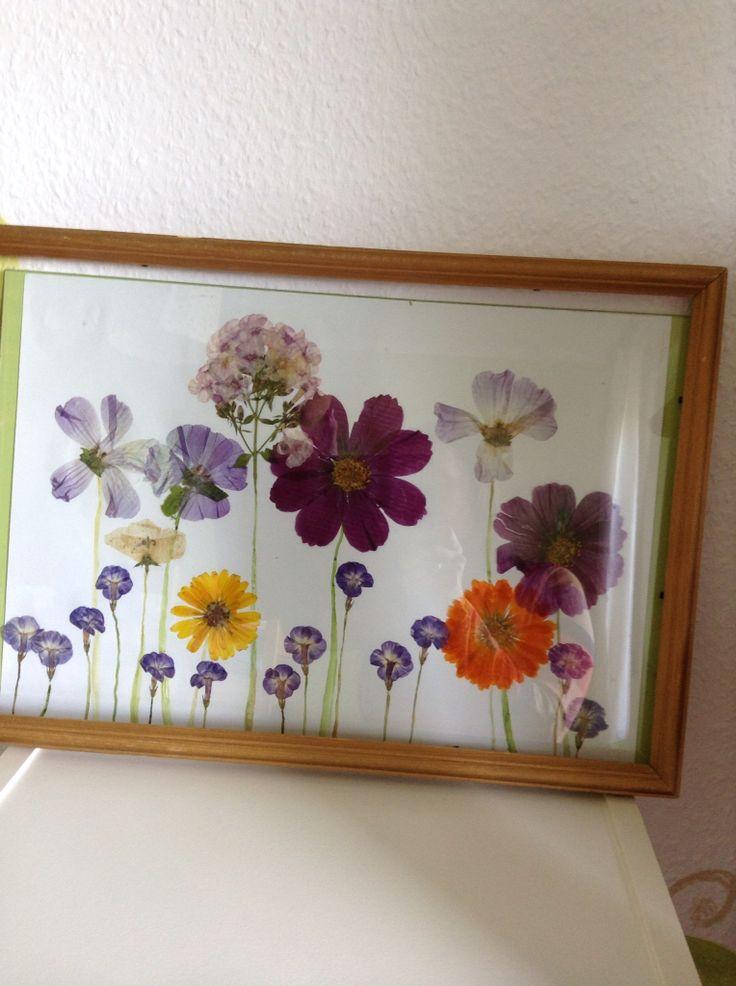 Blumenbild gepresste Blumen