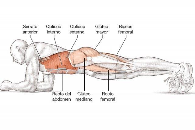 Anatomía triatleta plancha