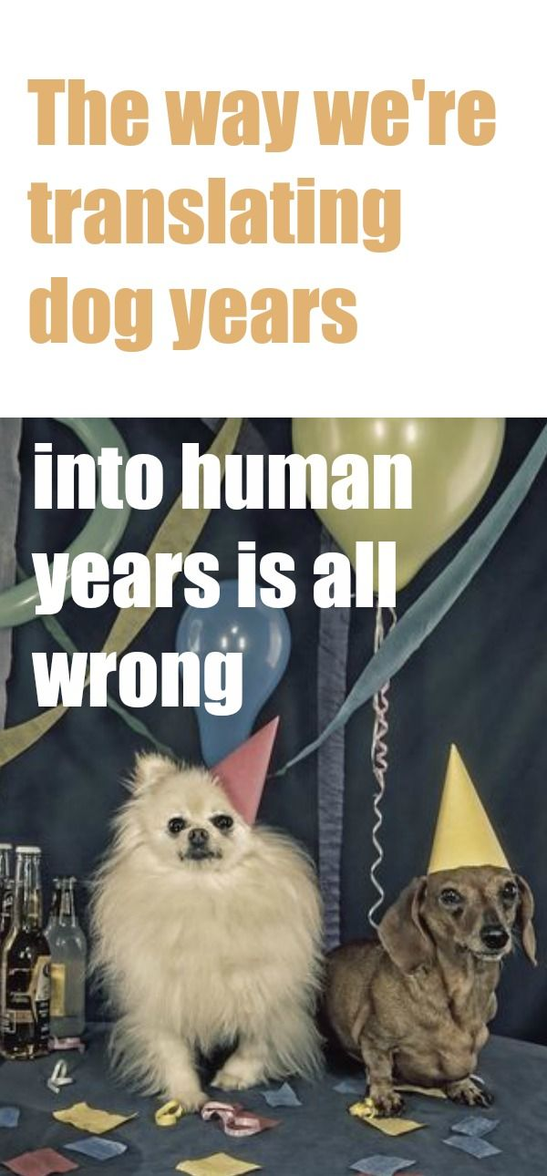 The Way We Re Translating Dog Years Into Human Years Is All Wrong Dog Years Dogs Dog Love