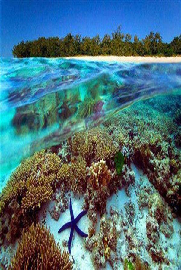 Great barrier reef, Australia #travel #blog #greatbarrierreef http://www.kwstyle.com/australia/top-5-great-barrier-reef-facts/