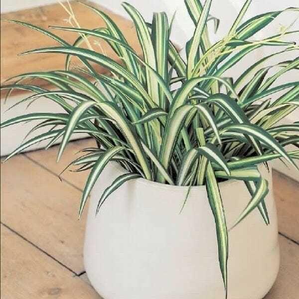 Rosliny Doniczkowe Proste W Uprawie Sposob Na Wszystko Porady Domowe Sposoby Jak Zrobic House Plants Plants Flowers