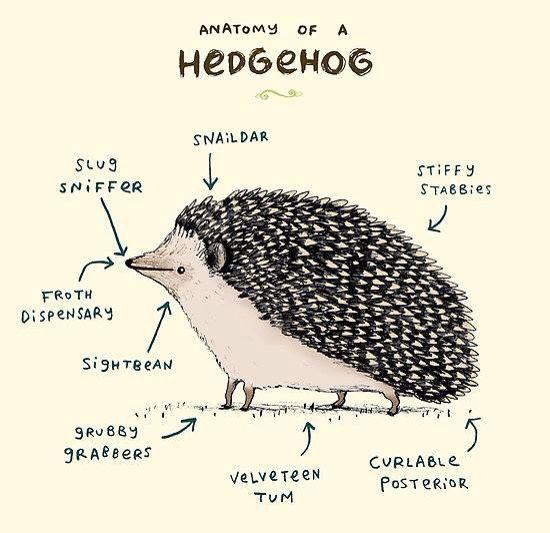 Hedgehog illustration                                                                                                                                                                                 More