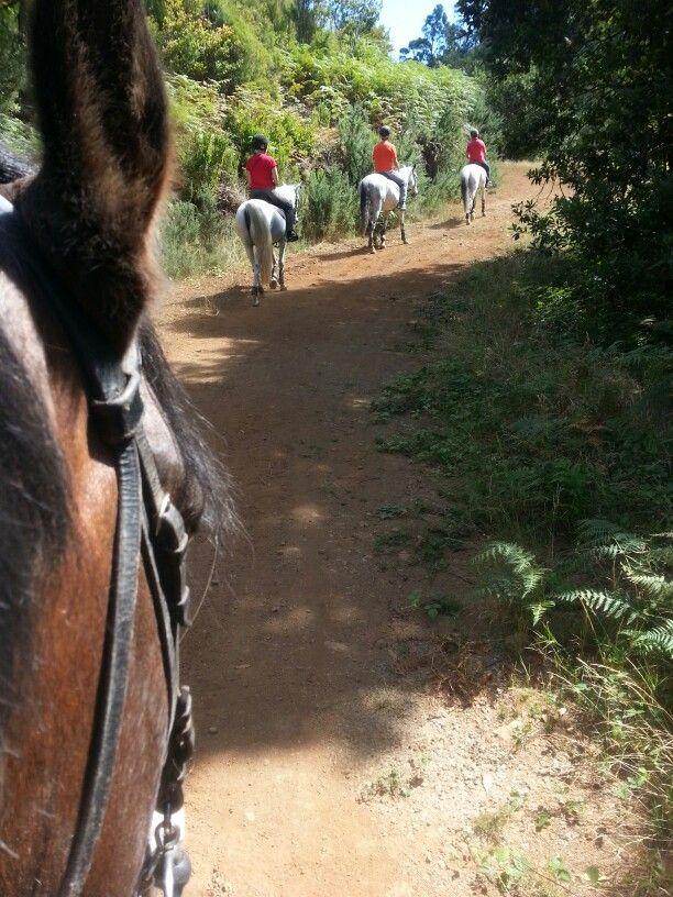 Hello!!!!!! #horse #madeira #nature #horsebackriding #pferd #cheval #natur #pferdereiten