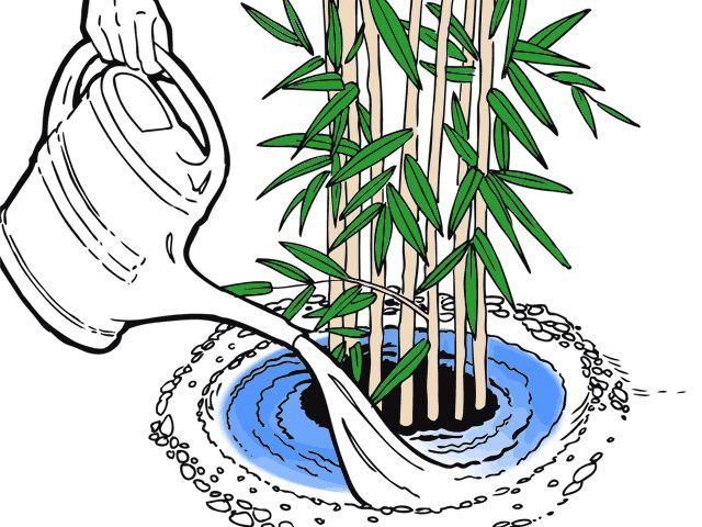 47 besten bambus bilder auf pinterest bambus g rtnern und wachsender bambus. Black Bedroom Furniture Sets. Home Design Ideas