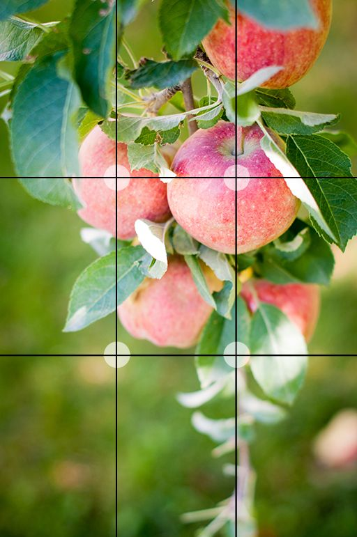 Rule of Thirds for Composition