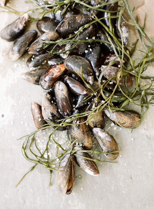 Bouchot mosseltjes: verfijnd en met een mooie kleur, smeuïg maar niet slap of vettig. Dat is ze allemaal, de bouchot-mossel. Haar naam komt van de palen die de mosselkweker in het zand plaatst om er het mosselzaad op te laten groeien. In Picardië (Frankrijk) worden ze alleen gekweekt op plaatsen die de mosseltjes de beste omstandigheden geven om uit te groeien tot een culinaire delicatesse. En bovenal worden ze vertroeteld met veel passie en kennis!
