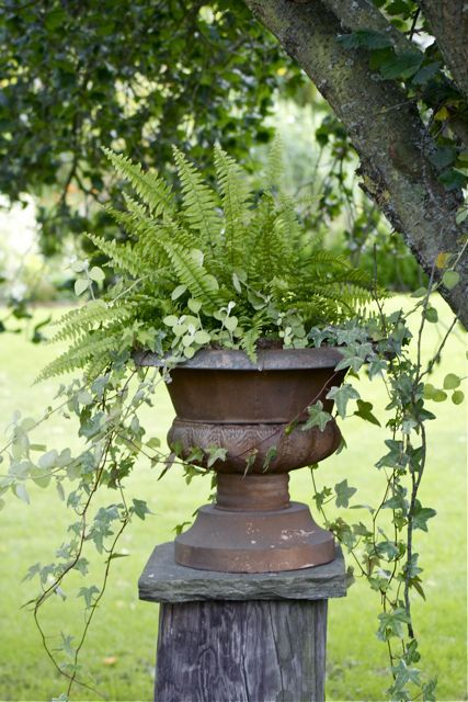 What's better than an Urn filled with  Ferns and trailing Ivy...???...!!!