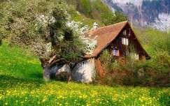 Svájc, faház, virágzó almafa, virágmező, tavasz