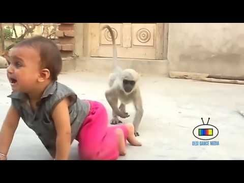 Videos For Fun: Naughty Monkey funny video | Funny Pets | MONKEYS ...