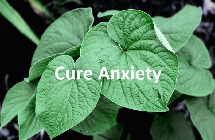 Natural Herbs For Anxiety That Actually Work