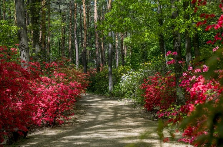 Jeli arborétum (sétálgatás - ápr máj jún)