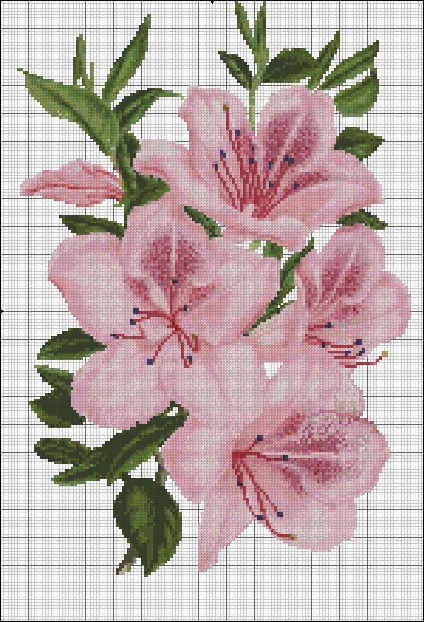 pink azalya