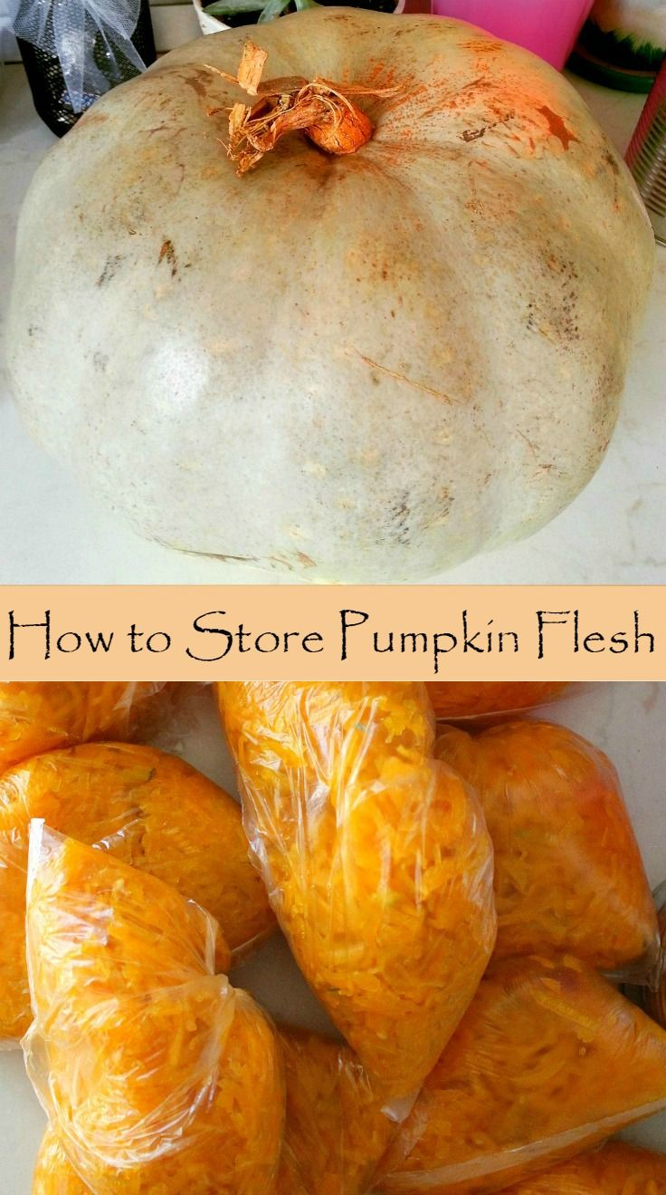 How to store pumpkins - Best 25 How To Preserve Pumpkins Ideas On Pinterest Preserve Pumpkin Carving Pumpkins And Pumpkin Carving