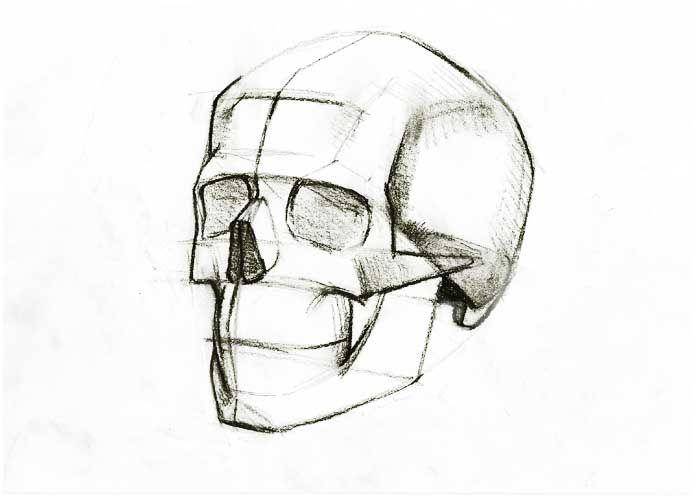 Skull Line Drawing Easy : Human skull line drawing