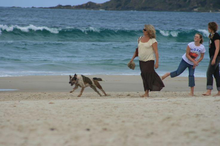 Go fetch, Byron Bay NSW