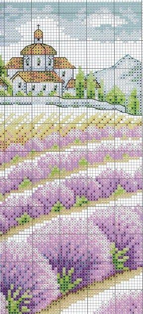 Champs de lavande- fields of lavender