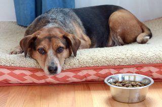 Can You Give Your Dog Peptobismol