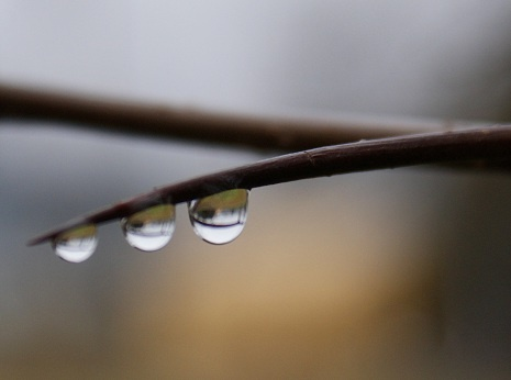"""Ever wondered what causes the """"smell"""" of rain? One factor are bacteria in the soil called actinomycetes which are activated by moisture and humidity."""