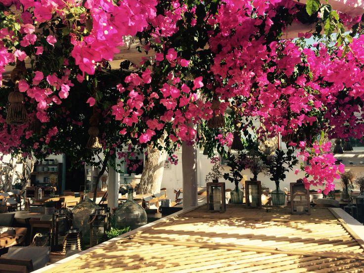 Restaurant in Chora