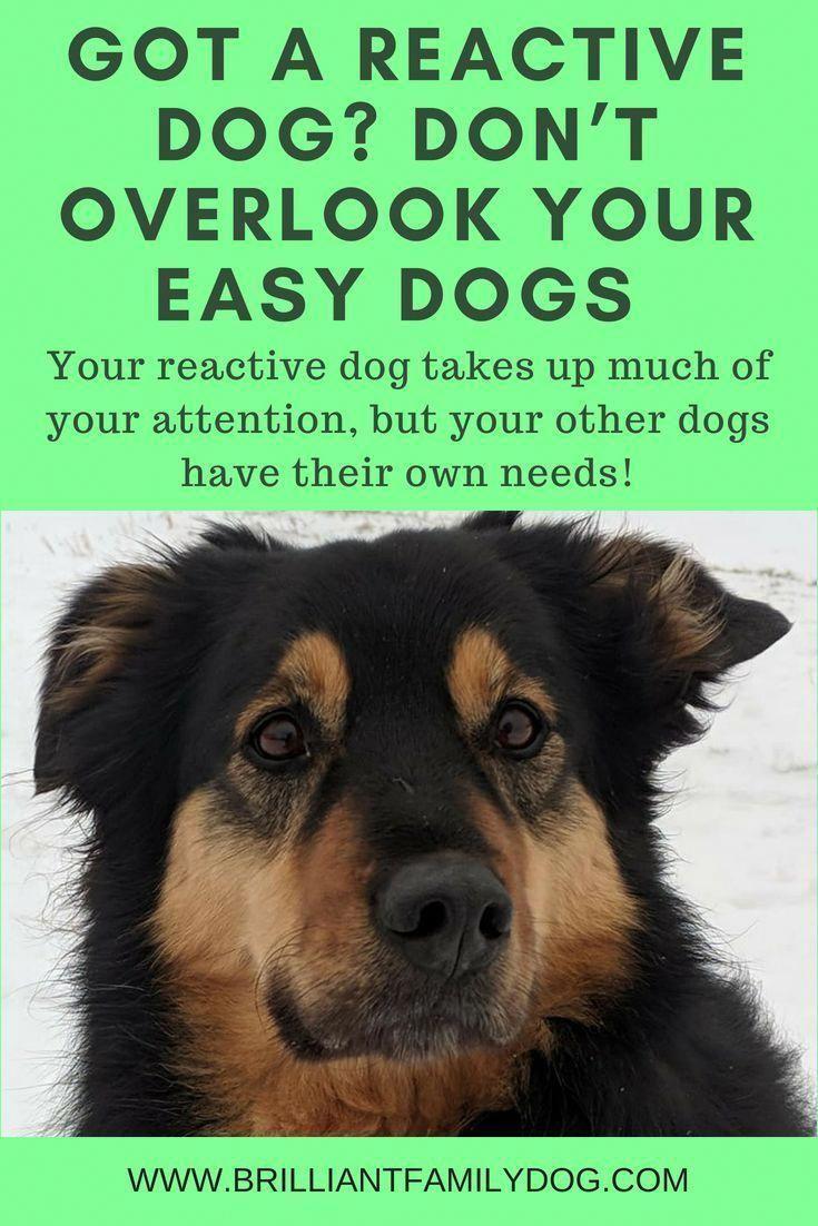 Easiestwaystotraindogs Dog Behavior Training Your Dog Reactive Dog