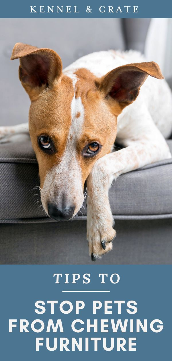 How To Stop Pets Chewing Furniture Pets Dog Care Dogs