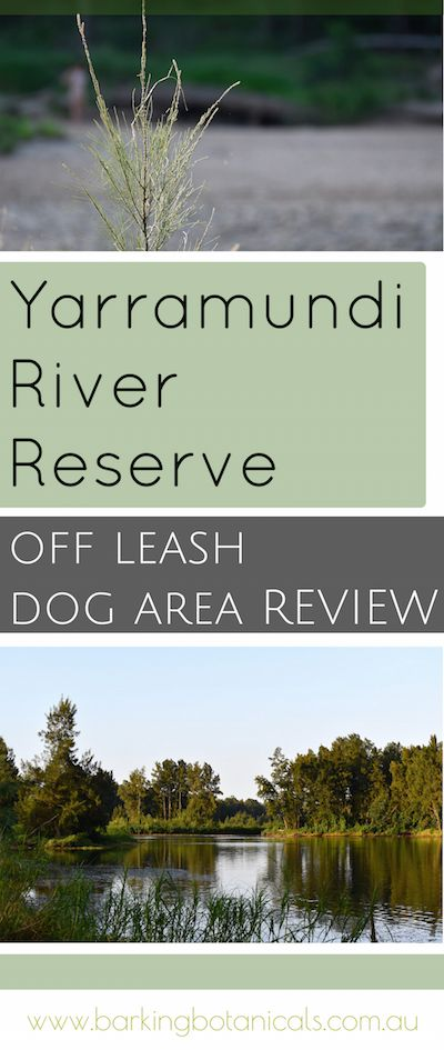 I absolutely love exploring dog-friendly areas all over Sydney. Yarramundi is one of my all time favourite spots and is only 20 minutes away from home. This great off leash dog area is on the banks of the river and is a total doggie heaven.