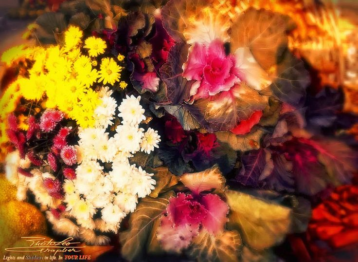 The Fall's Parade... 5     by   http://PhotoLeoGrapher.blogspot.com
