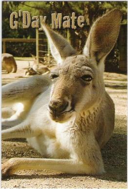 Australian saying - G'day mate!