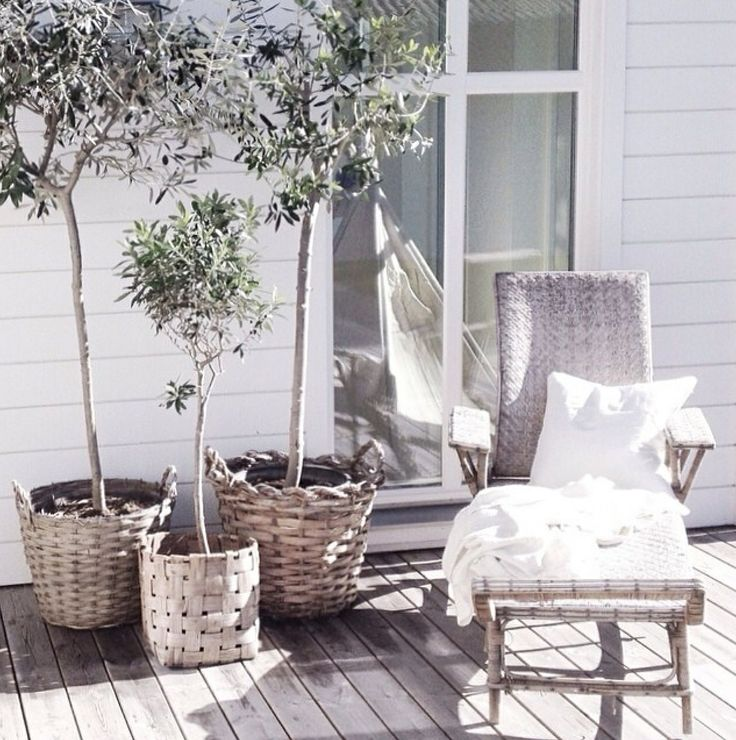 Chic Patio with Bay Trees