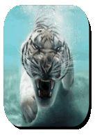 Tiger Live Wallpaper - https://apkfd.com/tiger-live-wallpaper/