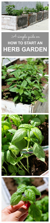 How to Start an Herb Garden (for Dummies)