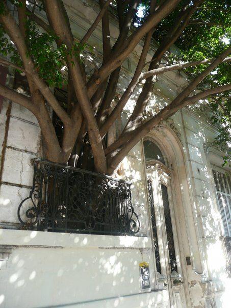 Esta casa queda en el barrio de Villa Crespo y tiene un árbol que nace dentro del edficio y se dirige hacia afuera buscando la luz. Nad...