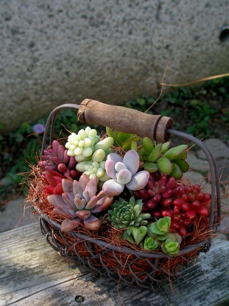 fun arrangement with vintage wire basket: