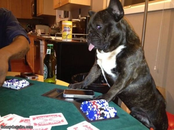 onling gambling blog