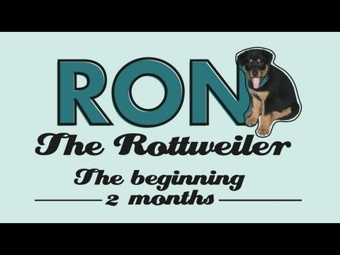 Ron The Rottweiler - The Beginning!! - 2 months puppy rottie #ron #rottweiler #rottie #puppy #puppies #dog #doggy #cute #pet #pets #funny #play #playing #begining #dominican republic #caribbean