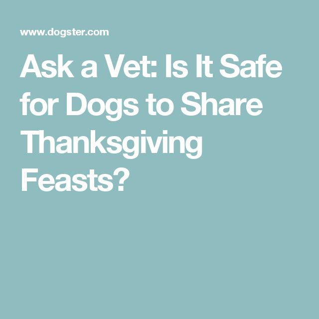 Ask a Vet: Is It Safe for Dogs to Share Thanksgiving Feasts?