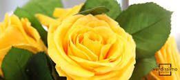https://www.verdissimo.com/es/noticias/significado-las-rosas-amarillas