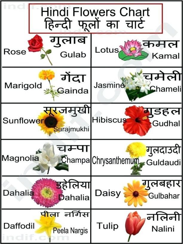 How Magnolia Flower In Hindi Meaning Is Going To Change Your Business Strategies Magnolia Flower In Hindi In 2020 Hindi Language Learning Hindi Alphabet Flower Chart