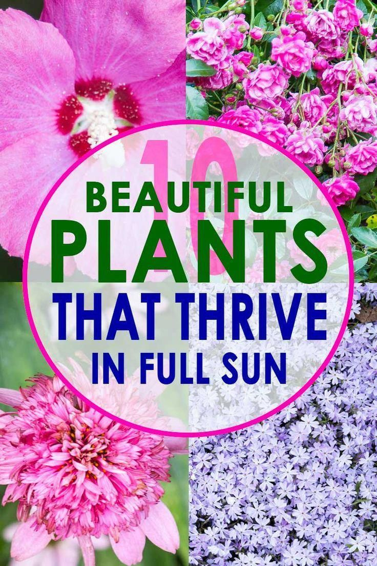 If you're a lazy gardener like me, these full sun perennials are for you! Low ma…