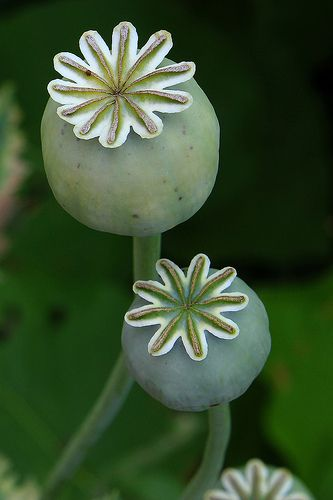 Poppy heads might add a nice botanical detail