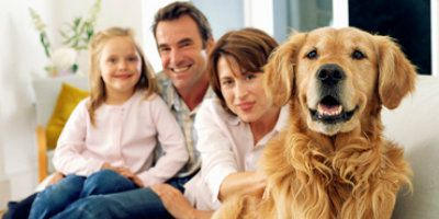 Keep your four and two legged family members safe