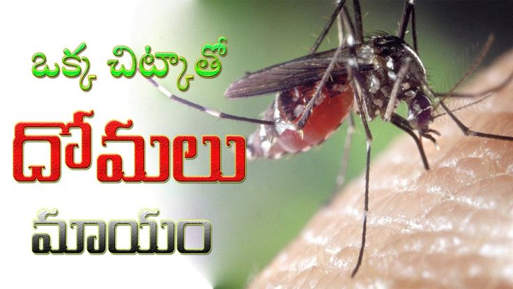 Amazing Natural Mosquito Repellent || How To Kill Mosquitoes Home remedy...