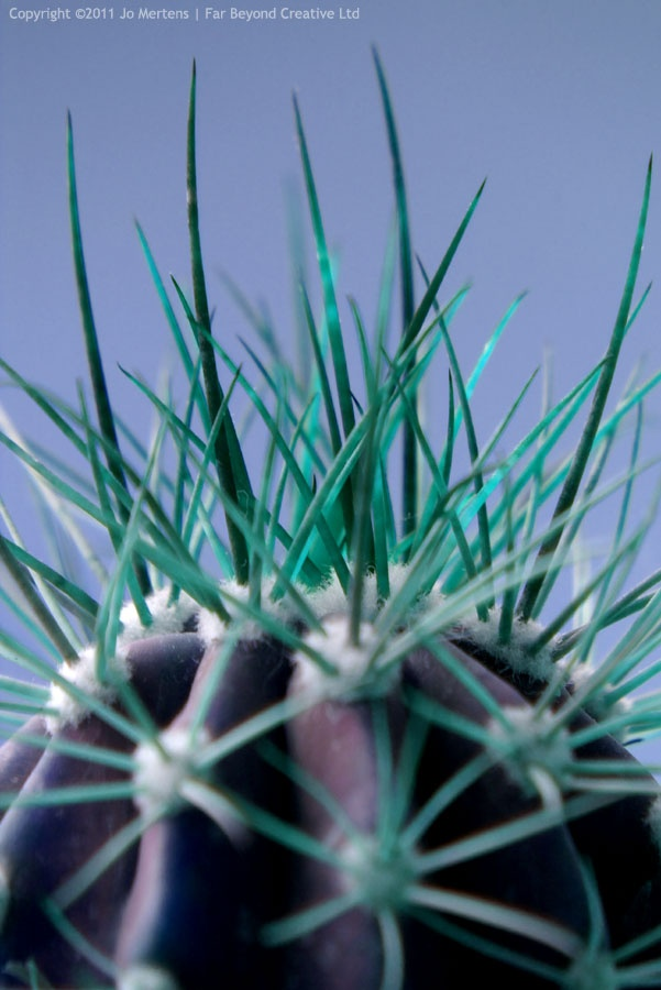 P8882A - Prickly Cactus  - Copyright © 2012 Far Beyond Creative