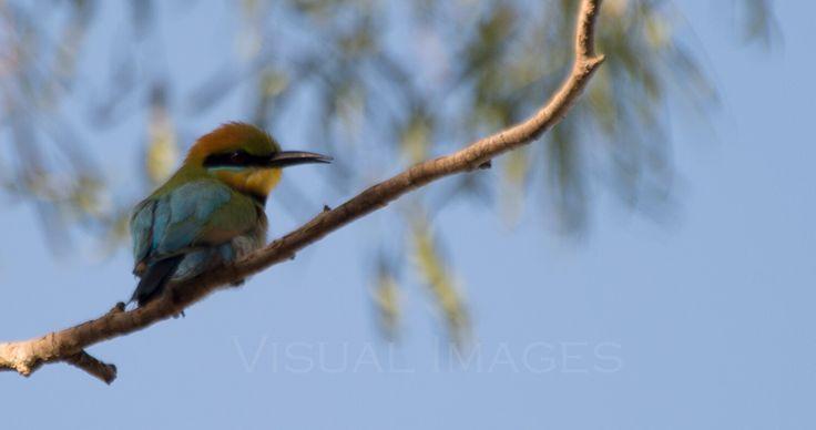 A Queensland Spring day 4 - http://blog.v-i-o.com/queensland-spring-day-4/ - http://blog.v-i-o.com/wp-content/uploads/2015/12/KingfisherColours-900x475.jpg