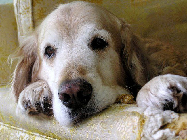 21 Natural Home Remedies for Pets : TreeHugger