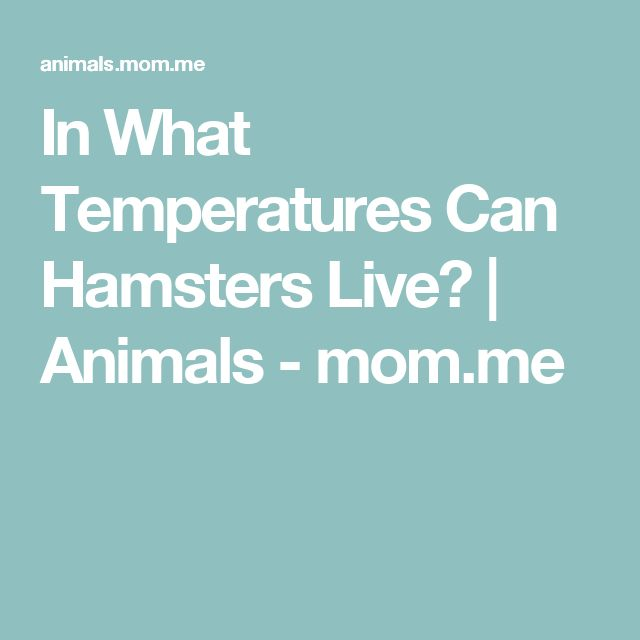 In What Temperatures Can Hamsters Live? | Animals - mom.me
