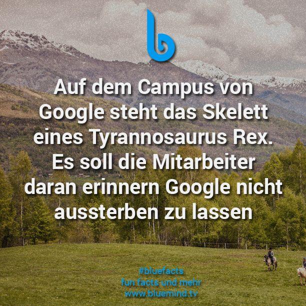 #bluefacts #fakten #facts #google #deutschland #deutsch #wissen #quote #zitat
